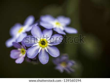 Closeup of a Pretty Blue Purple and Yellow Flower with Dark Green Bokeh Background - stock photo