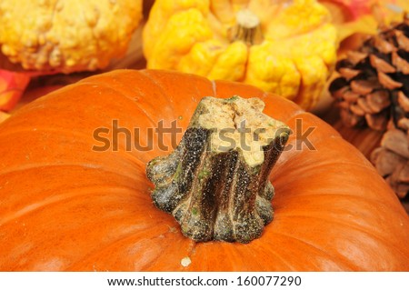 Closeup of a pumpkin with pine cones and colorful gourds in the background