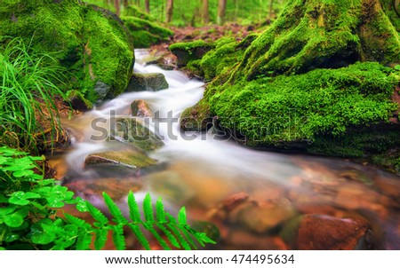 Closeup of a small forest brook, the clear water gently flowing through moss covered forest ground