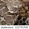 Closeup of a Southern Pacific Rattlesnake (Crotalus viridis helleri). - stock photo