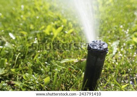Closeup of a sprinkler watering a garden. - stock photo