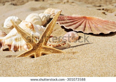 closeup of a starfish and some seashells and conches on the sand of a beach - stock photo
