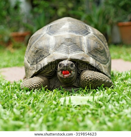 closeup of a tortoise on the floor