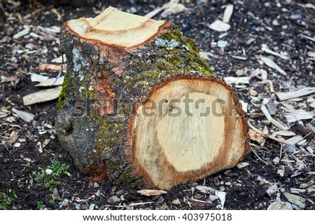 Closeup of a tree stump outdoor on the ground - stock photo