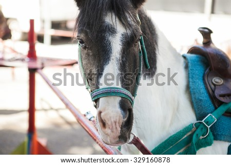 Closeup of a white and gray pony horse. Side view head shot of a pony ready for riding - stock photo