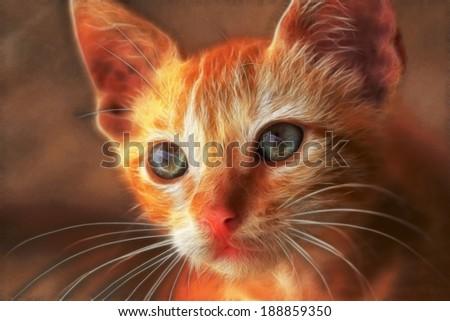 closeup of a young tomcat - stock photo