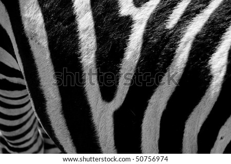 Closeup of a zebra pattern with black and white stripes