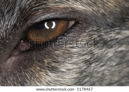 closeup of animal eye