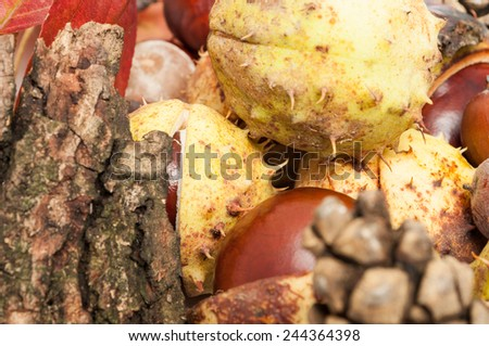 Closeup of autumn concept with chestnuts in shell and wood bark - stock photo