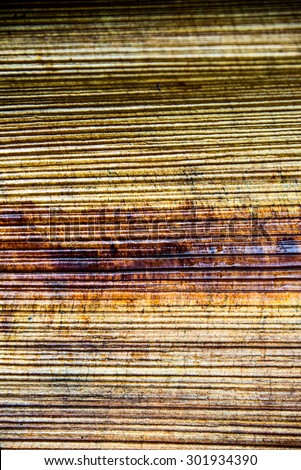 closeup of banana tree texture - stock photo