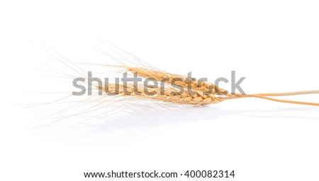 Closeup of barley ear over a white background