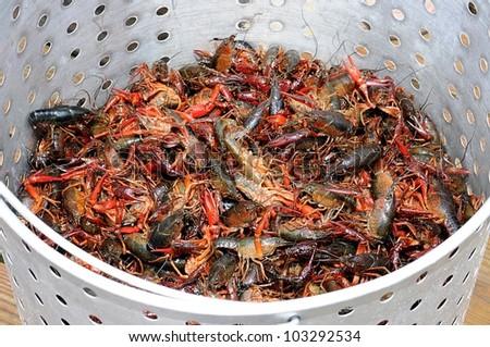 Closeup Of Basket Of Live Louisiana Crawfish - stock photo