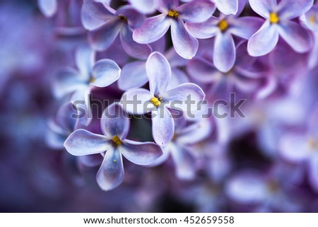 Closeup of beautiful and delicate spring lilac flowers  - stock photo