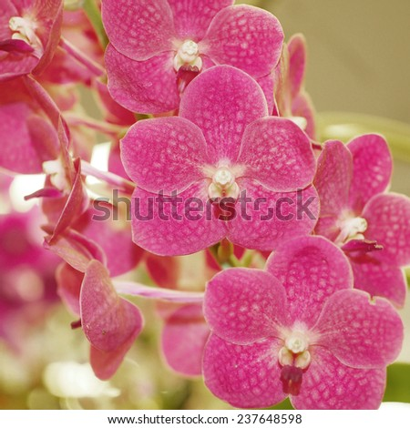 closeup of beautiful orchid flower