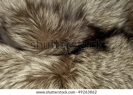 Closeup of beautiful polar Fox fur. Useful as background - stock photo