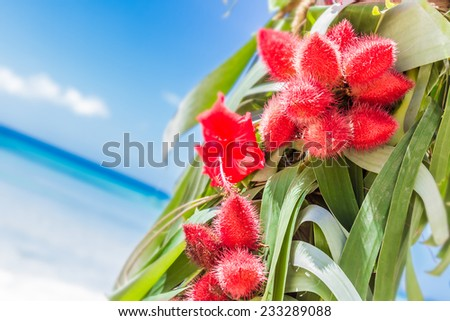 closeup of beautiful wedding arch decorated with palm trees and flowers on tropical sand beach, beach wedding setup - stock photo