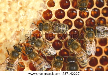 closeup of bees on honeycomb