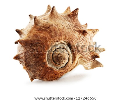 Closeup of big spiked seashell, isolated on white. - stock photo