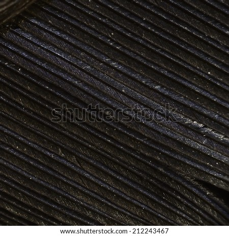 Closeup of black feather of Blackbird