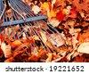 closeup of blue rake in a leaf pile - stock photo