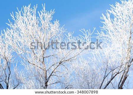 Closeup of branches of a tree, covered with rime frost against a blue sky