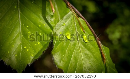 Closeup of bright water drops on green leaf - stock photo