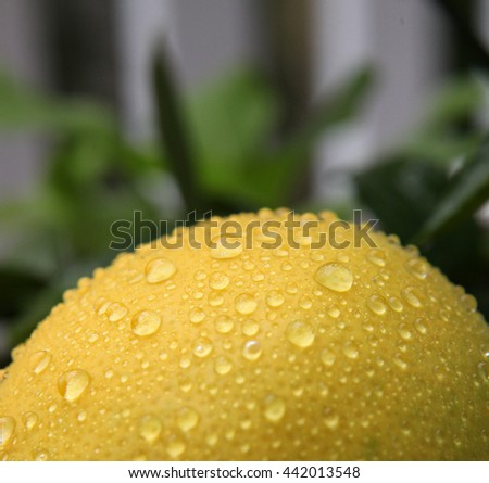 Closeup of bright yellow lemon with water droplets on surface