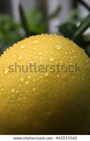 Closeup of bright yellow lemon with water droplets on surface - stock photo