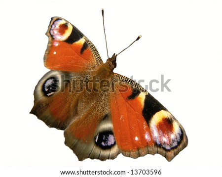 closeup of butterfly in the white background - stock photo