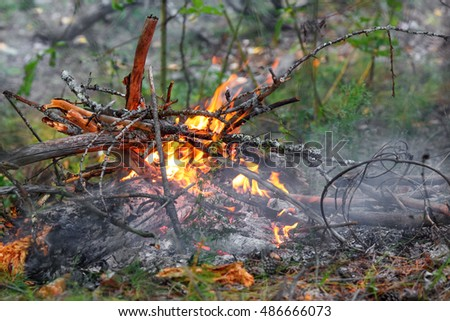 Closeup of campfire flame and firewood on the ground