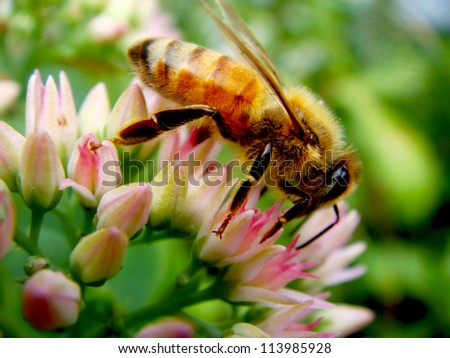 Closeup of carpenter bee on flower - stock photo