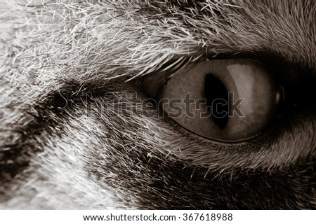 Closeup of cat eye - stock photo