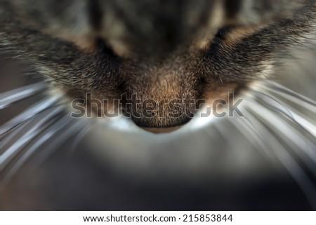 Closeup of cat nose - stock photo