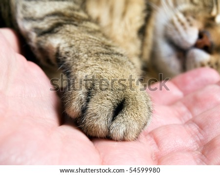 Closeup of cat paw in the man hand. - stock photo