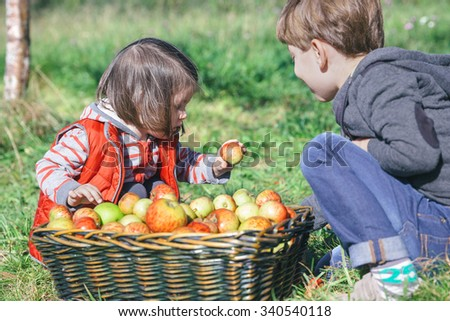 Closeup of children holding fresh organic apple from a wicker basket with fruit harvest. Nature and childhood concept.  - stock photo