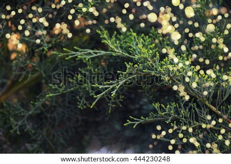 Closeup of Christmas-tree - stock photo