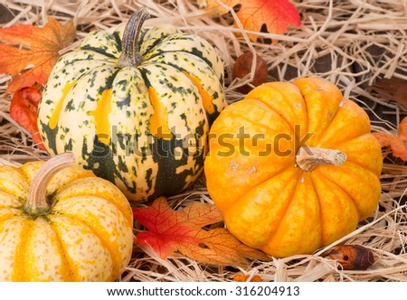 Closeup of colorful autumn squash on straw