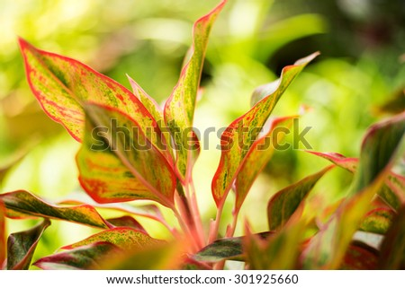 Closeup of colorful leaves of plants in the garden, on blurred background