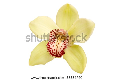 closeup of colorful orchid on white background - stock photo
