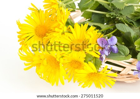 Closeup of colts-foot and wild violets in a basket - stock photo