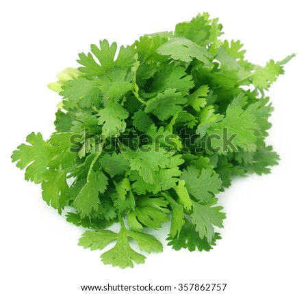 Closeup of coriander leaves over white background
