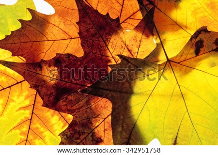 Closeup of Different Autumn Leaves - stock photo