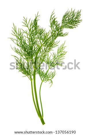 closeup of dill herb leaf isolated on white background. food ingredient - stock photo