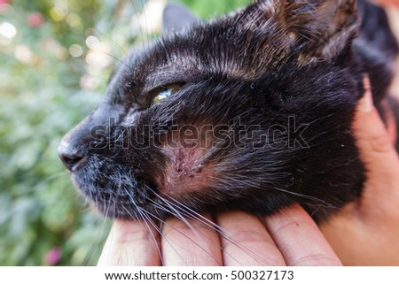 Closeup of dirty hurt cat with injured face