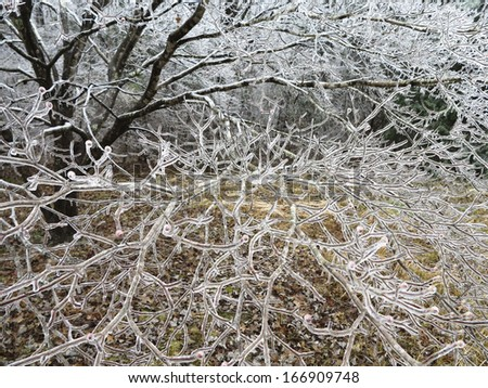 Closeup of Dogwood After Ice Storm - stock photo