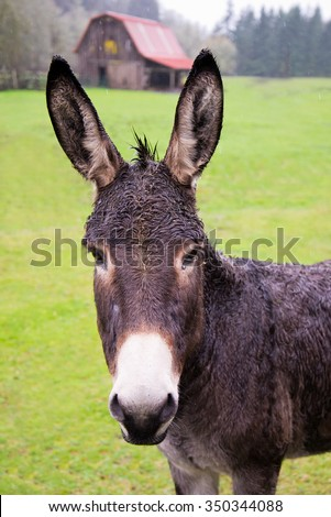 Closeup of donkey with red barn in background - stock photo