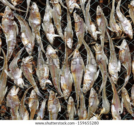 Closeup of dried anchovies being sun dried process for preservation.  - stock photo