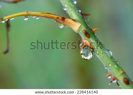 closeup of drop after rain on plant - stock photo