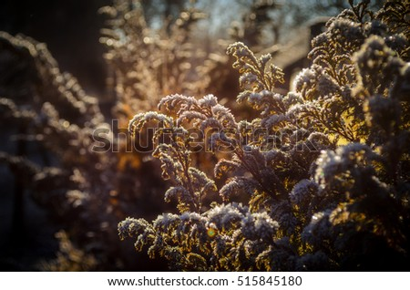 closeup of dry flowers under snow