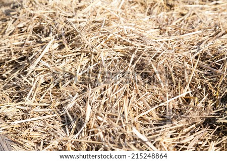 closeup of dry straw haystack with selective focus - stock photo
